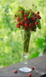 Bouquet of wild strawberries Wallpaper HD screenshot 1/3