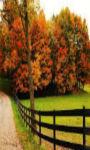 Autumn trees in courtyard Wallpaper  screenshot 1/3
