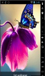 Butterfly On Tulip Live Wallpaper screenshot 2/2