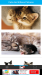Cats And Kittens Pictures screenshot 2/6