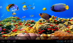 Aquarium Live Wallpapers Free screenshot 4/4