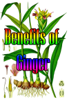 Ginger Benefits screenshot 1/3