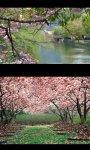 Spring Landscapes screenshot 4/4