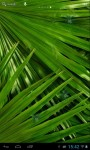 Palm branches screenshot 2/3