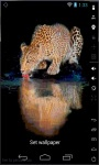 Thirsty Leopard LWP screenshot 2/2
