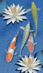 3D freshwater Fish pond screenshot 2/6