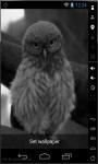 Funny Owl LWP screenshot 3/3