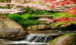 Beauty Of Nature Live Wallpaper screenshot 2/3