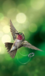 Bird Wallpapers Android Apps screenshot 6/6