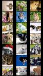 Cats Wallpapers free screenshot 1/5
