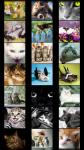Cats Wallpapers free screenshot 2/5
