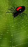 Web with spider free screenshot 5/5