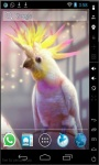 Crested Parrot Live Wallpaper screenshot 1/2