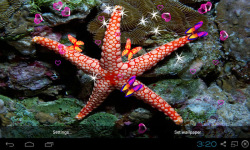 3D Starfish Live Wallpaper screenshot 1/5