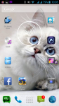 Free Cat Pictures screenshot 6/6