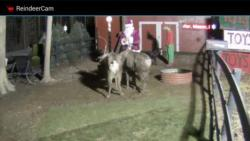 ReindeerCam primary screenshot 1/4