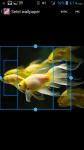 Free Fish Wallpaper screenshot 3/4