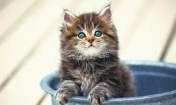 Picture of cute kittens ever HD Wallpaper screenshot 1/6