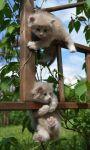 Picture of cute kittens ever HD Wallpaper screenshot 3/6