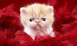 Picture of cute kittens ever HD Wallpaper screenshot 6/6