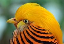 Exotic Cute Bird Wallpaper screenshot 1/6