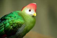 Exotic Cute Bird Wallpaper screenshot 2/6