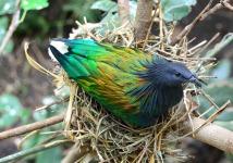 Exotic Cute Bird Wallpaper screenshot 4/6