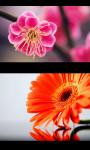 Best Flowers Gallery screenshot 1/5