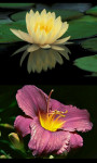 Best Flowers Gallery screenshot 2/5