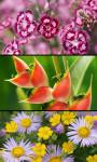 Best Flowers Gallery screenshot 3/5