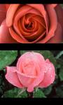 Best Flowers Gallery screenshot 5/5
