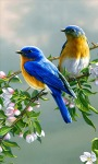 Birds on Branch LWP screenshot 1/3