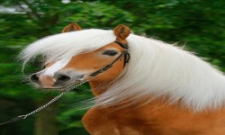 White Hair Horse Live Wallpaper screenshot 2/3