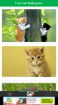 Free Download Cat Wallpapers screenshot 2/6