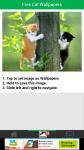 Free Download Cat Wallpapers screenshot 3/6