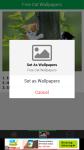Free Download Cat Wallpapers screenshot 4/6