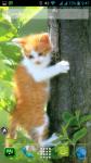 Free Download Cat Wallpapers screenshot 6/6