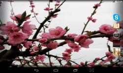 Spring Wallpaper Live screenshot 2/4