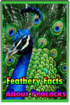 Feathery Facts About Peacocks screenshot 1/3