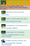 Feathery Facts About Peacocks screenshot 2/3