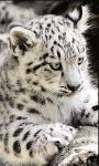 Leopard Baby live wallpaper screenshot 1/3