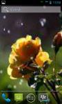 Best 50 Rain Garden Wallpaper  screenshot 6/6