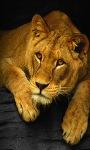 Cool Tiger Live Wallpaper screenshot 3/3
