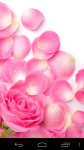 Pink Wallpapers free screenshot 5/5