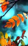 Beautiful Leaf in the Autumn Wallpaper screenshot 2/6