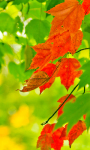 Beautiful Leaf in the Autumn Wallpaper screenshot 4/6