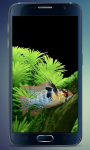 Aquarium 2015 Live Wallpaper screenshot 2/4