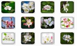 Apple Blossom Onet Classic Game screenshot 1/3
