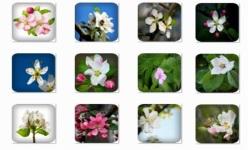 Apple Blossom Onet Classic Game screenshot 3/3