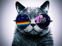 Cat Glasses Slideshow Live wallpaper screenshot 1/6